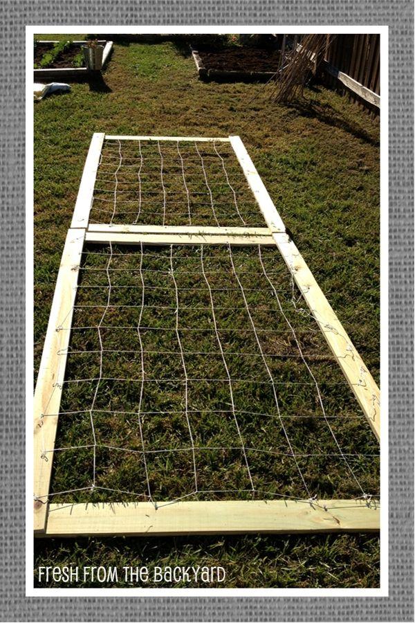 Pea Trellis Vegetable Garden Blog Garden Pinterest