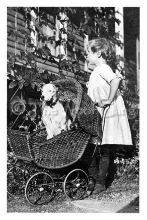 Girl pushing her pitbull in a pram.