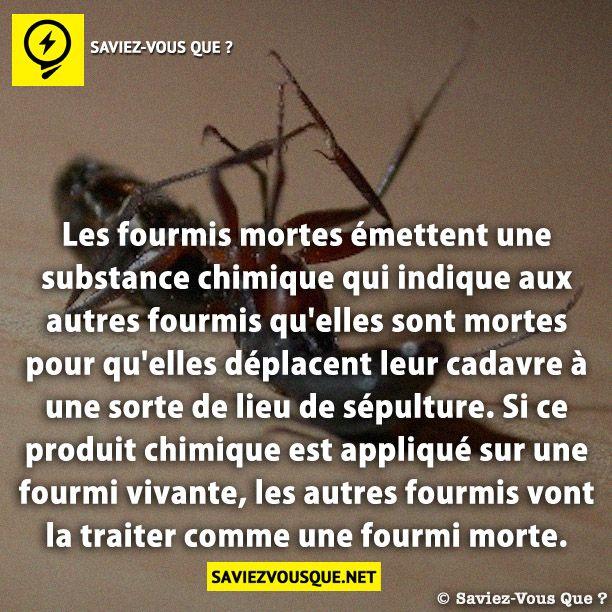 les fourmis mortes mettent une substance chimique qui indique aux autres fourmis qu 39 elles sont. Black Bedroom Furniture Sets. Home Design Ideas