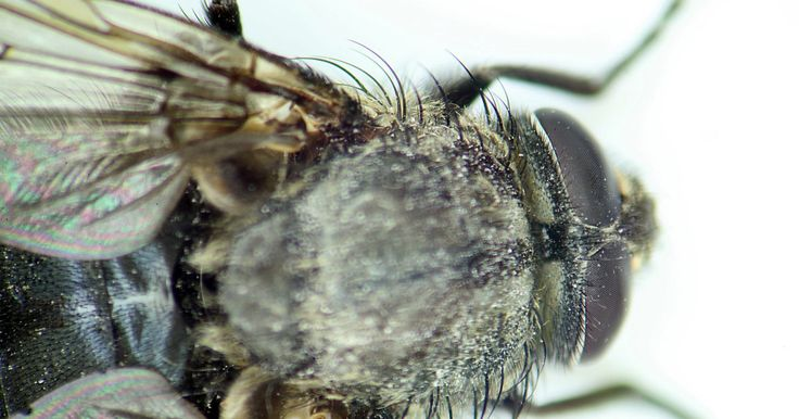 ¿Cómo mantener las moscas alejadas de los restaurantes?. La mosca doméstica es una plaga común de producción nacional que puede transmitir enfermedades contagiosas como la fiebre tifoidea y el cólera. Las moscas son atraídas a los alimentos y otras sustancias orgánicas que son abundantes en los restaurantes. Los restaurantes tienen que mantener estrictos códigos de salud y no pueden permitir que haya ...