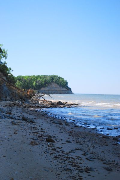 Maryland's Calvert Cliffs along the Chesapeake Bay, a popular fossil-hunting site.