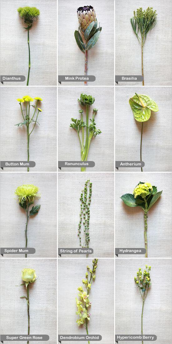 green flower guide
