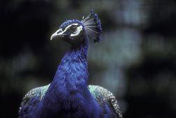 Birds - National Zoo