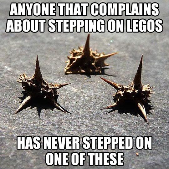 LOL!  When I was a kid I ran around barefoot and these goat-heads were my worst enemies!