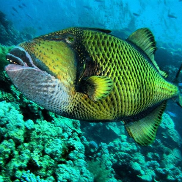 Mar Rosso  #diving #sub #subacquea #marrosso