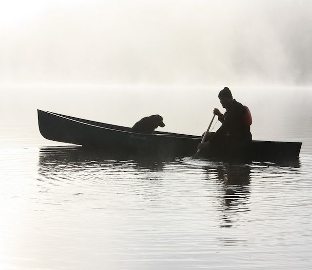 Follow our expert tips so you can bring your dog along on canoeing adventures