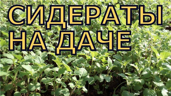 Сидераты осенью: сеем правильно. Обсуждение на LiveInternet - Российский Сервис Онлайн-Дневников
