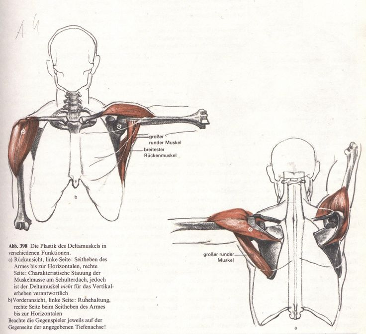 9 best Anatomy ✤ Back images on Pinterest | Anatomy reference ...