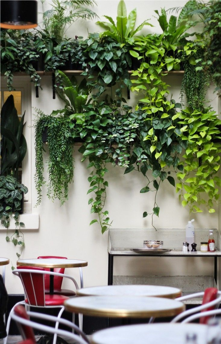 plants on shelves growing vertically on wall above tables and chairs in cafe