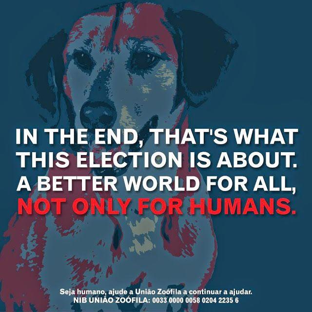 Já sabem que sou pela Causa Animal. Costumo contribuir para a União Zoófila e outras associações de menor dimensão, porque é-me impossível ficar indiferente perante tanta injustiça para com os animais.Vamos todos apoiar esta nobre causa! Américo, o Cãodidato a Presidente do Mundo. Solidariedade. Animals Lover. Style Statement. Blog de moda portugal.