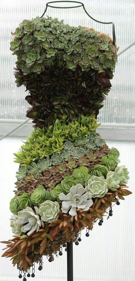 Dress form succulents by Tammy Sawyer Simpson. Form filled with moss and then planted with both rooted and clipped succulents. (Dress form from Hobby Lobby.).  Window display