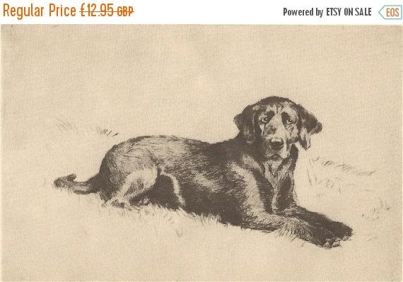 SALE CECIL ALDIN Print. The Labrador. Vintage Print. Vintage Bookplate. Dog Print.
