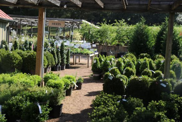 17 Best Images About Potted Boxwood On Pinterest Gardens