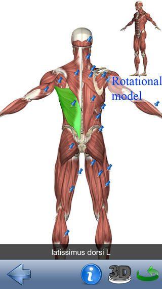 The visual anatomy lite er gratis. Betalingsversione koster 19 kr. Her lærer man hvad de forskellige dele af kroppen hedder på engelsk. Det er 3d roterende modeller af kroppen.