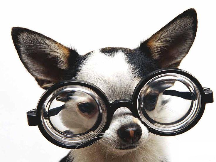 Os cães também sofrem com as doenças oculares, assim como nós, e para prevenir que seu cachorro sofra com catarata, glaucoma ou infamação nos olhos é importe levar seu cachorro ao veterinário regularmenteregularmente, mesmo que seu cachorro ainda seja apenas um filhote, porque através de exames, o oftalmologista veterinário irá identificar se ele possui ou …