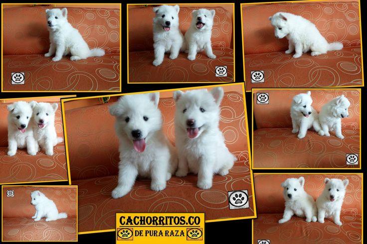 www,cachorritos.co