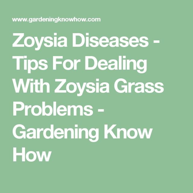 Zoysia Diseases - Tips For Dealing With Zoysia Grass Problems - Gardening Know How
