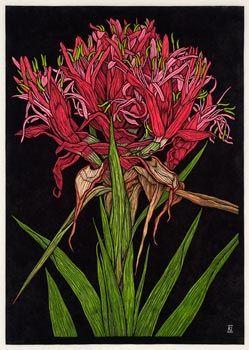 Rachel Newling, Australian Artist & Printmaker