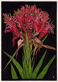 """""""Rachel Newling, Australian Artist & Printmaker - Love the gymea lily and love this one with the black. S"""""""