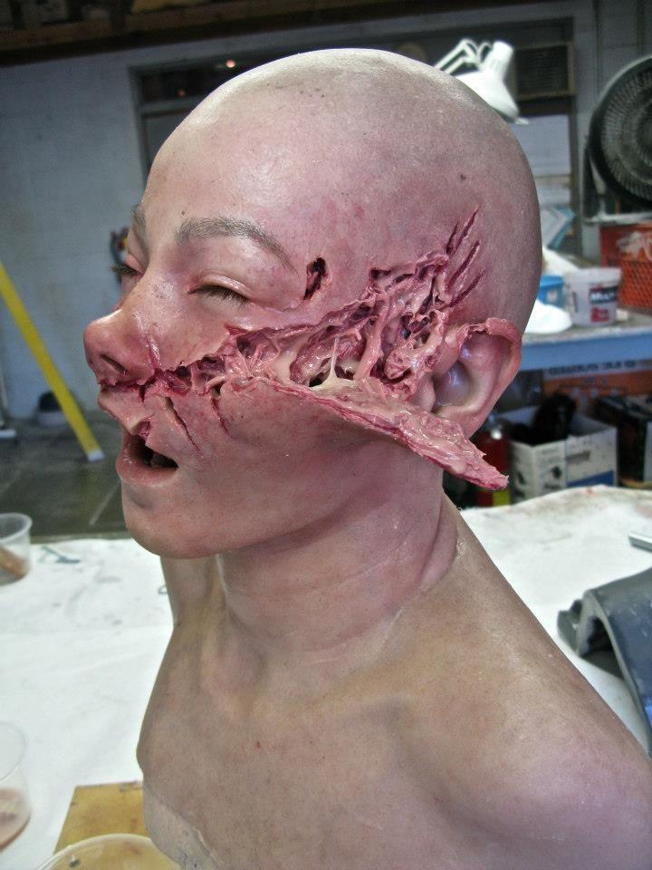 Dog face anatomy