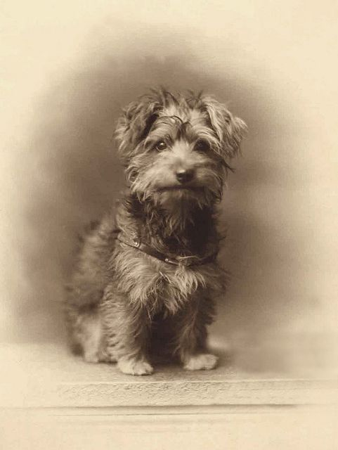 +~+~ Antique Photograph ~+~+  Puppy Love.
