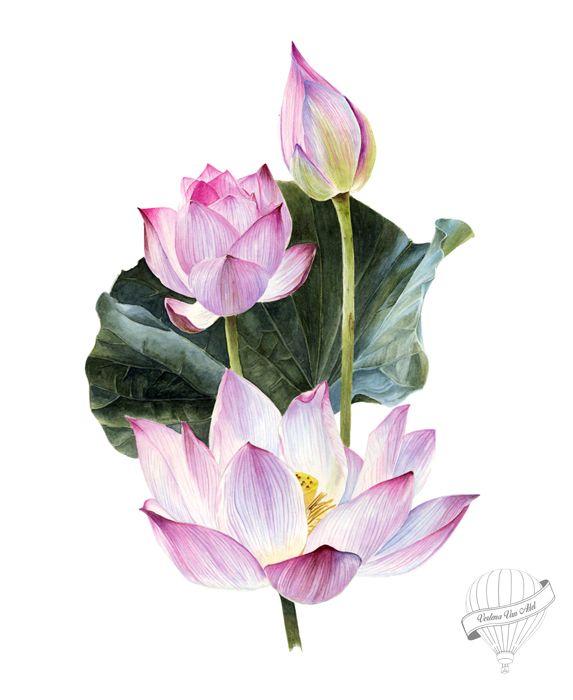 watercolour lotus on Behance