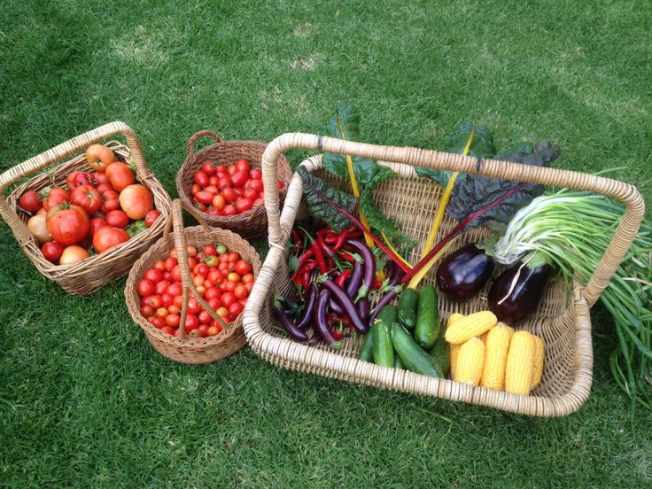 Our fortnightly harvest.