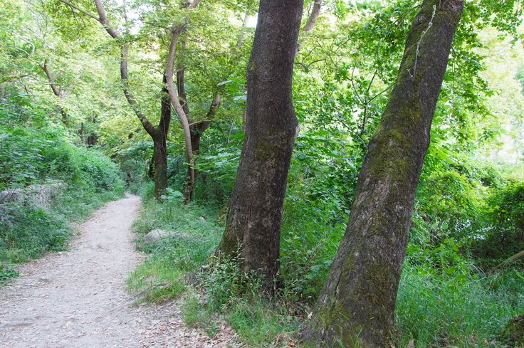 Acheron Springs - The Footpath
