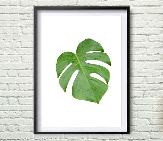 17 best split leaf philodendron images on Pinterest Cheese plant - editable leaf template