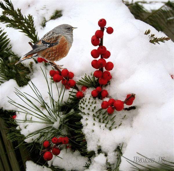 Le temps qui passe dans le jardin d'Eugénie : Photo