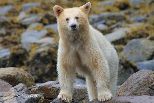 Die Spirit Bear Lodge in British Columbia - ein Geheimtipp  - MySpotlight Kanada & USA