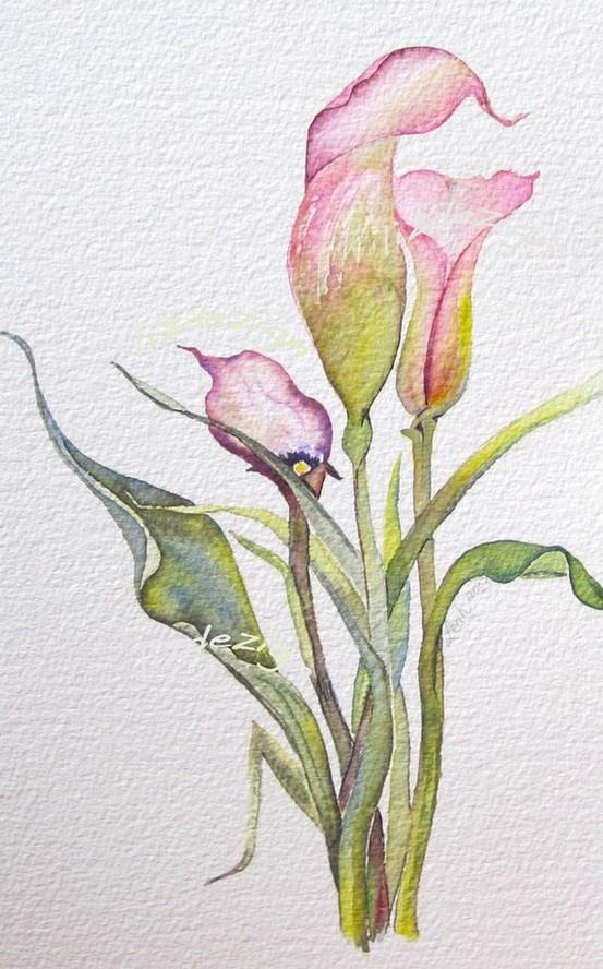 Calla Lilly watercolour ...