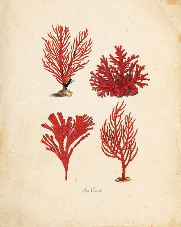 Vintage Sea Coral on Antique Ephemera Print 8x10