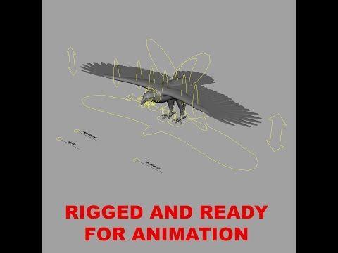 Bald Eagle 'Haliaeetus Leucocephalus ' Rig Show Maya - YouTube