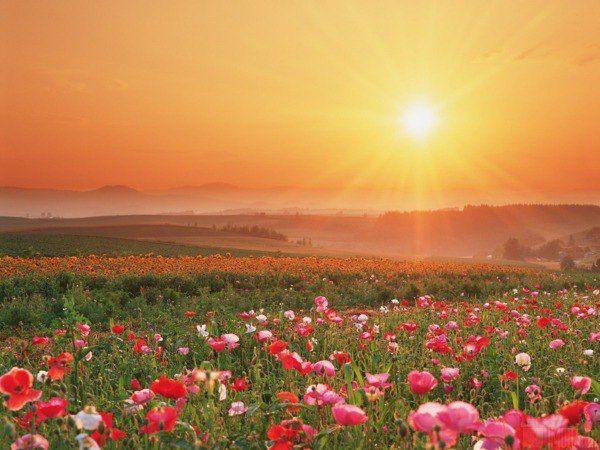 Было бы хорошо, если бы вы каждый день говорили: «Я люблю тебя, матушка-Земля! Спасибо тебе за твою чистоту, красоту, нежность и любовь ко всему, что живёт».