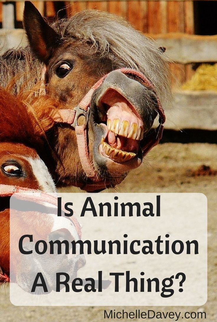 Find out how your horse may be communicating with you.