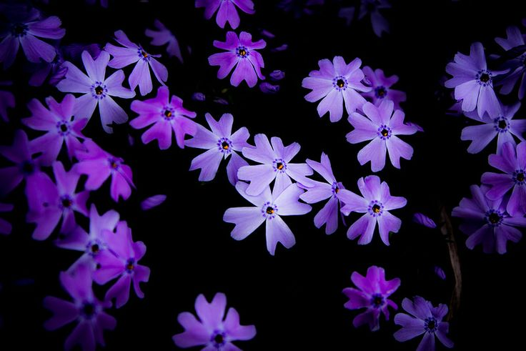 The Colour Purple (www.pointshogger.com)