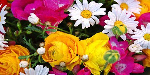 Çiçek Falı http://tarotfali.web.tr/cicek-fali/