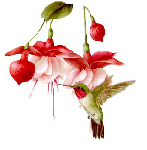 Яндекс.Фотки hummingbird