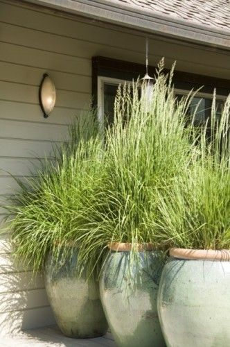 for the back yard- plant lemon grass for privacy and to keep the mosquitos away. I just like the big pots full of grass!