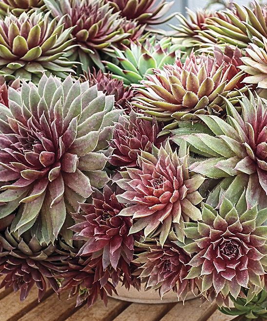 1000+ images about Grow on Pinterest | Gardens, Japanese painted ...