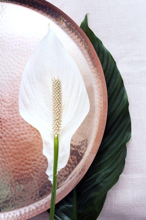 De plant van de maand juni, de Lepelplant… kijk maar waarom!