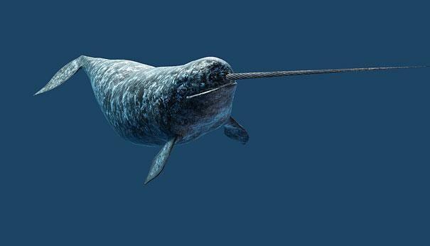 Unicornio marino