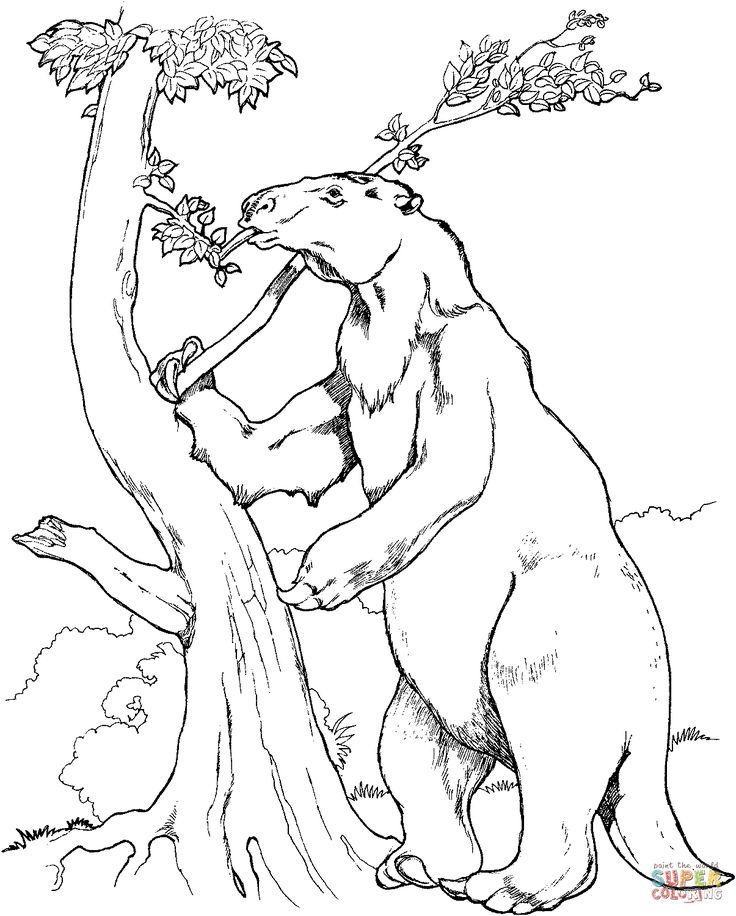 Sloth Eats Leaf Coloring Page 1205x1500 Extinct