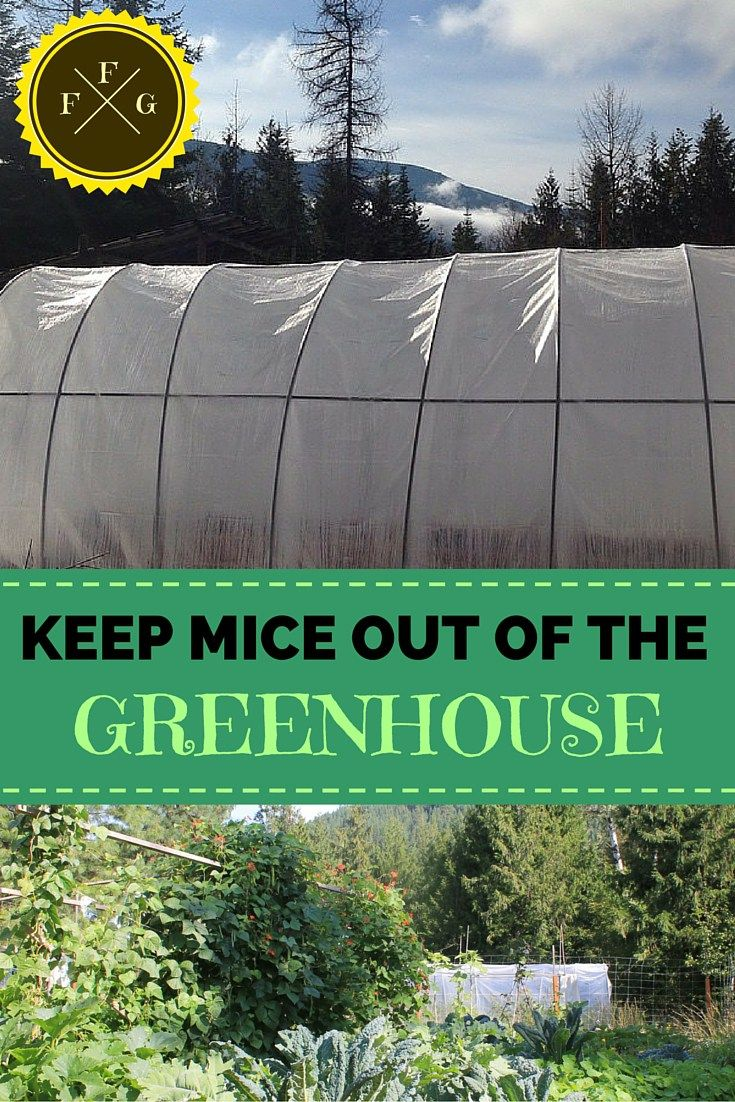 how to keep mice out of house