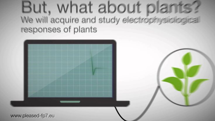 http://pleased-fp7.eu/ this research project is dedicated to analyzing the reactions of plants to all kinds of environmental stimuli and creating  sort of a digital vocabulary out of that. In the end the idea is to establish a whole network of plants that lets you supervise the environment and maybe directly communicate with nature.