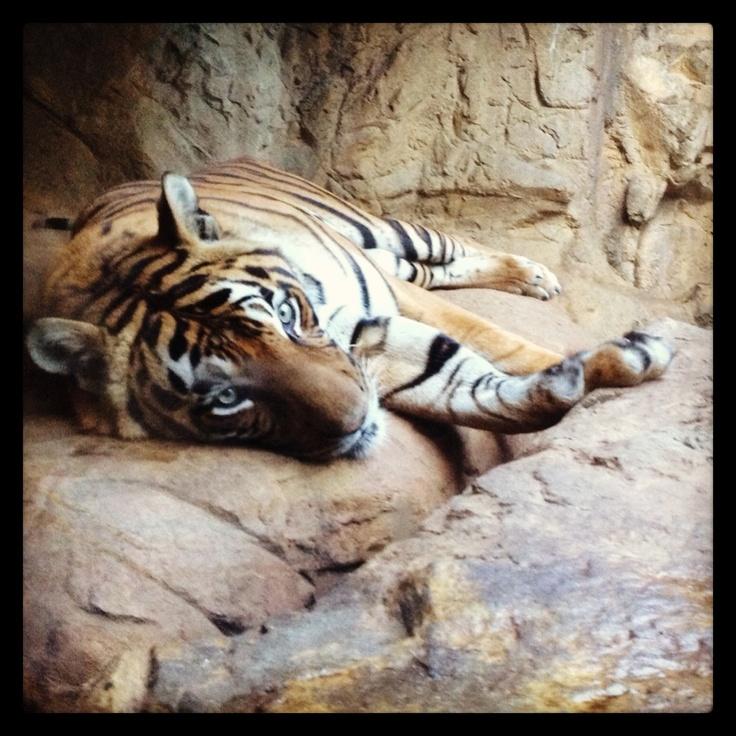 Birmingham Zoo @Matty Chuah Birmingham Zoo