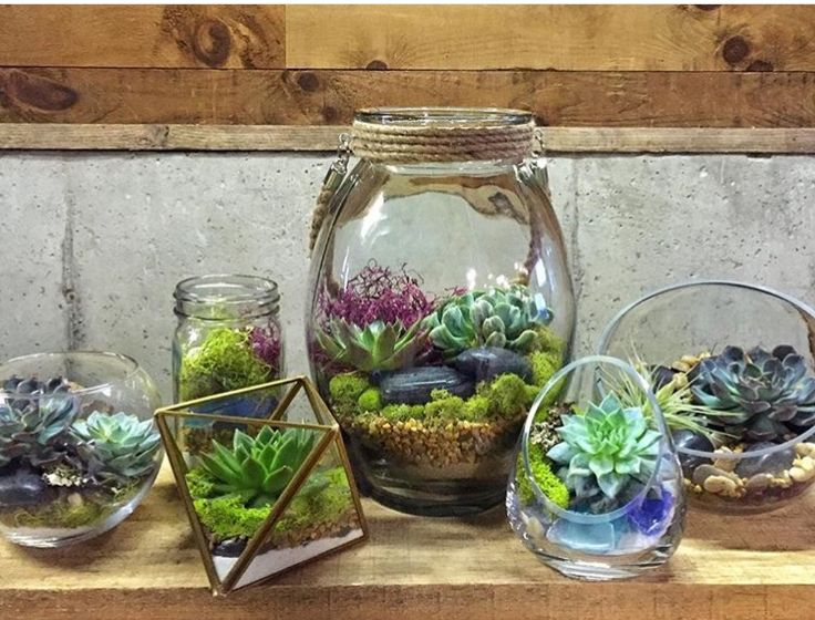air plant terrariums layered with sand sea glass pebbles green and purple moss and sea. Black Bedroom Furniture Sets. Home Design Ideas