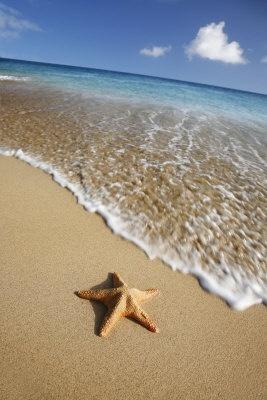Starfish on the beach at Costa Calma on Fuerteventura Island
