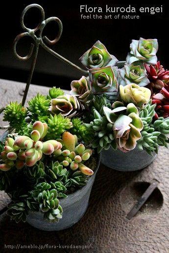 多肉植物の寄せ植えの画像   フローラのガーデニング・園芸作業日記